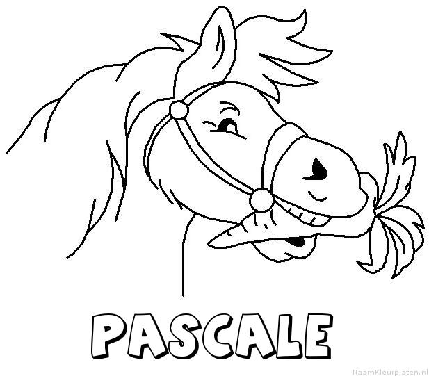 Pascale paard van sinterklaas kleurplaat
